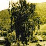 689 Blick auf den Hansenbauernhof um 1940