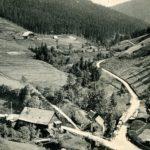 050 Ak Rippoldsau Holzwald um 1920