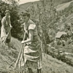 276 Heuernte im Frohnbach um 1950